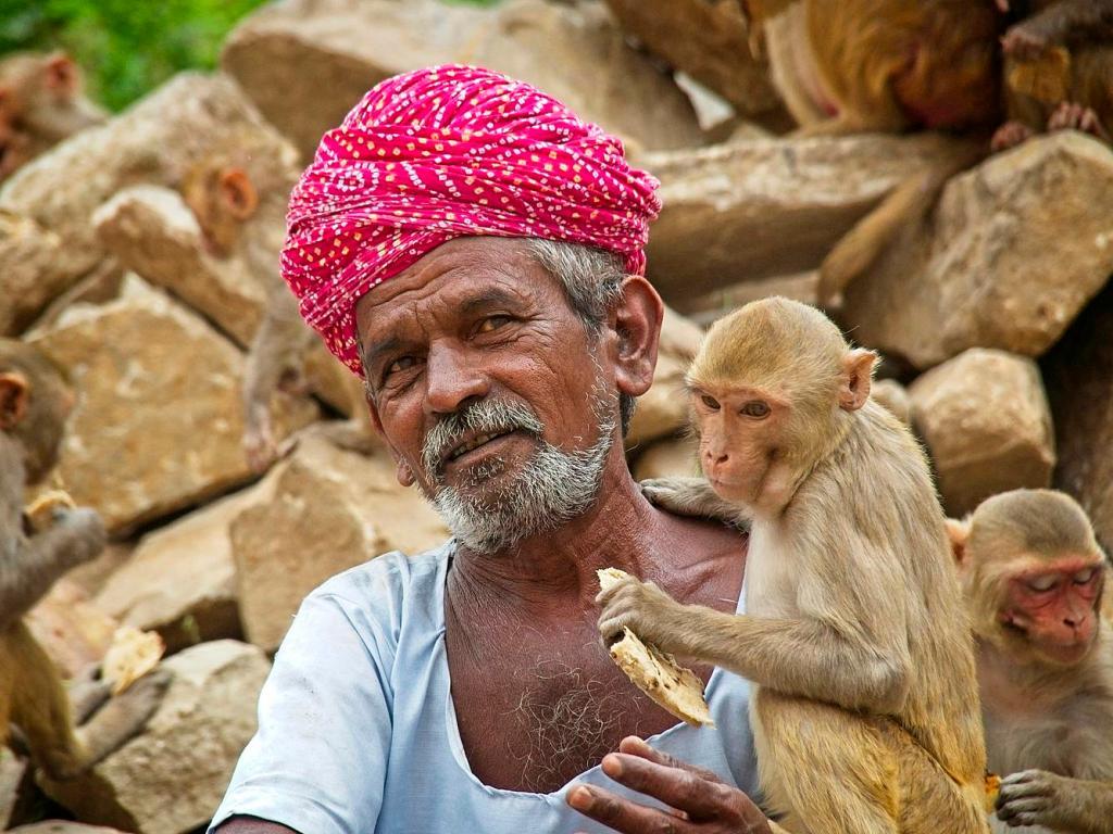Indian Man feeding monkeys bread at the Monkey Temple, Jaipur, India by Sam Davis Professional Travel PortraitPhotographer