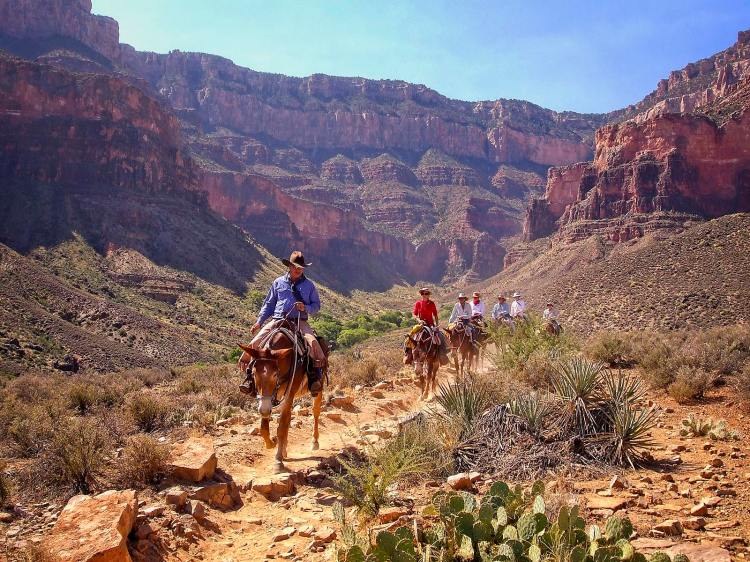 Mule ride in the Grand Canyon, Arizona, USA.Several mule riders take a trek down from the southern rim of the Grand Canyon to Plateau Point. Arizona, USA. Sam Davis Photographer. www.samsphotogallery.com