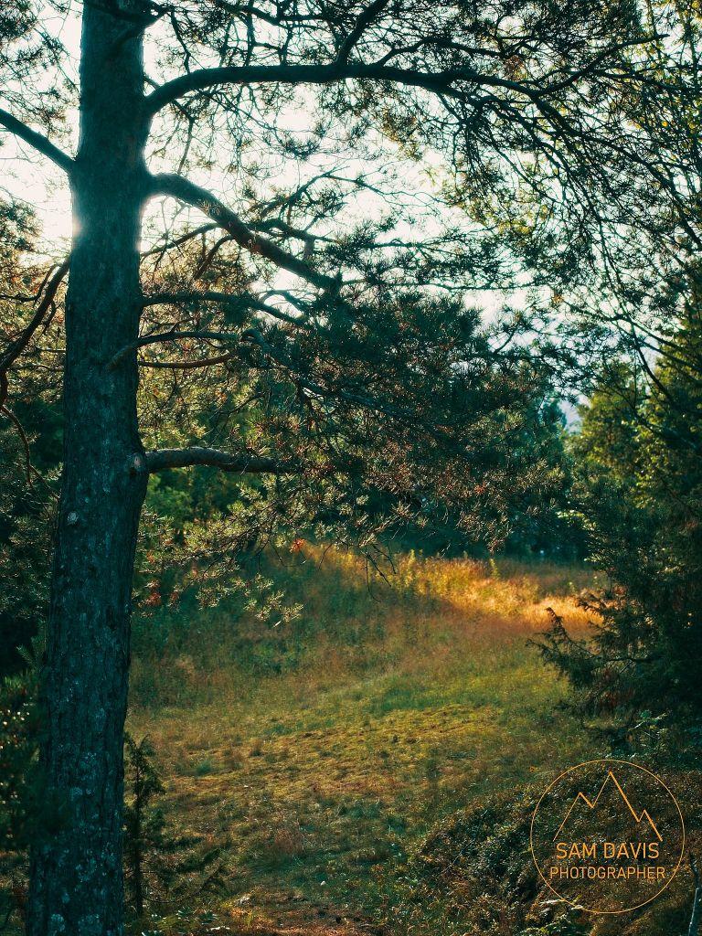 Woodland near Vika camping, Valldal, Norway by Sam Davis Photographer.