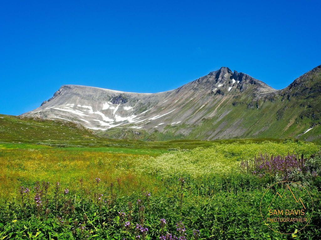 Alpine meadow near Grandevatnet, Geiranger, Norway by Sam Davis Photographer